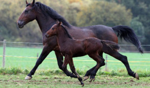 HORSE ACCIDENT COMPENSATION CLAIMS UK